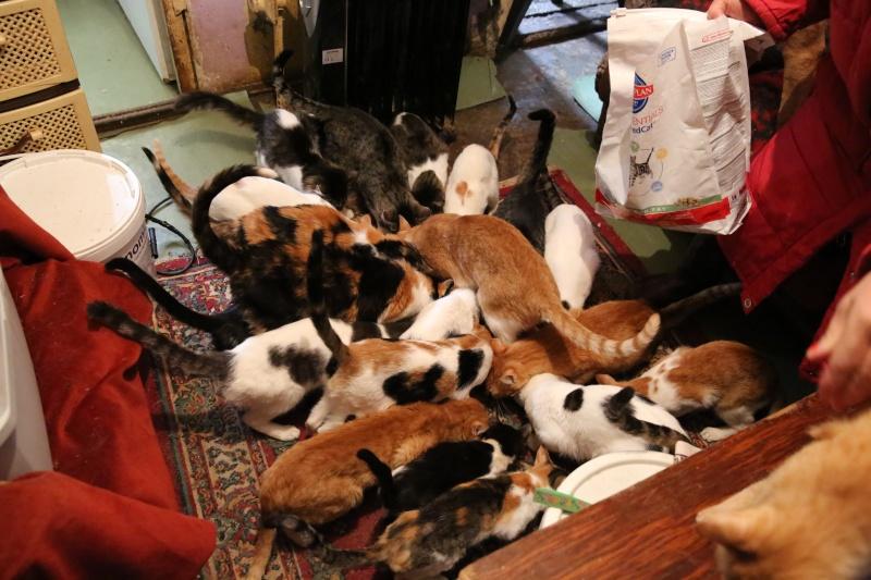 Parrainage des chats de Mme Angela Hx9a4216