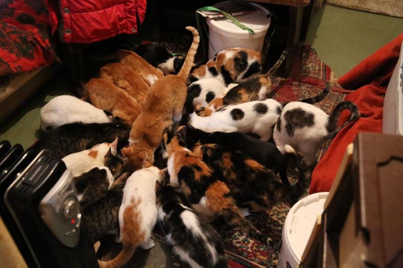 Parrainage des chats de Mme Angela Hx9a4217