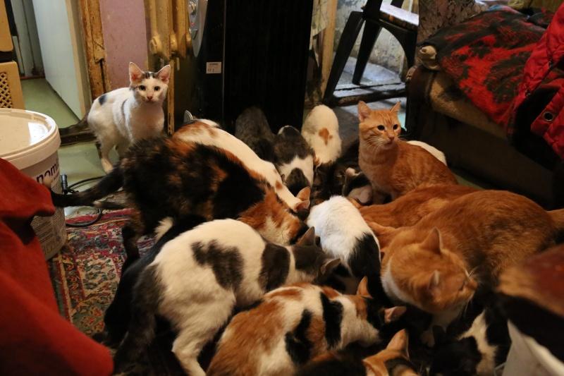 Parrainage des chats de Mme Angela Hx9a4220