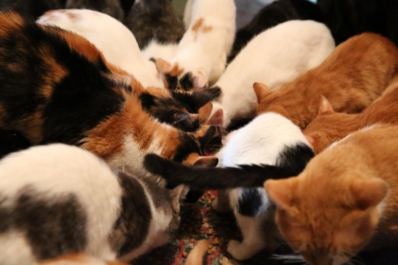 Parrainage des chats de Mme Angela Hx9a4221