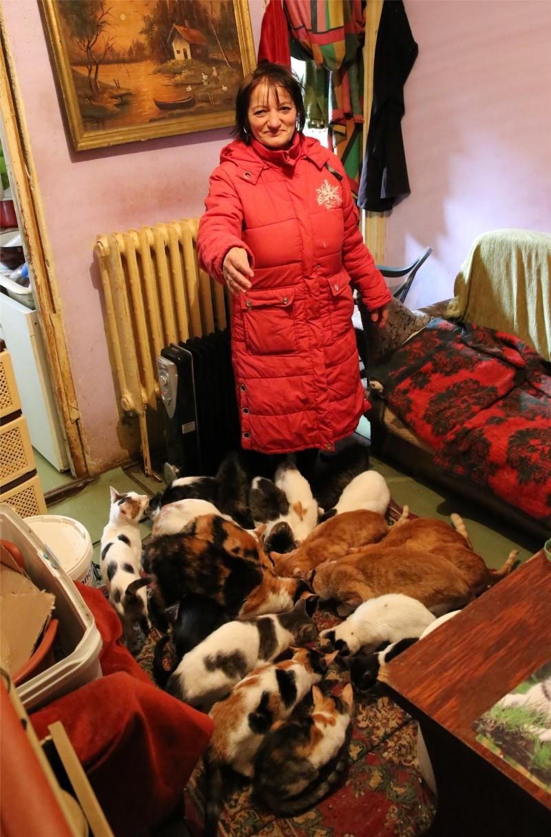 Parrainage des chats de Mme Angela Hx9a4222