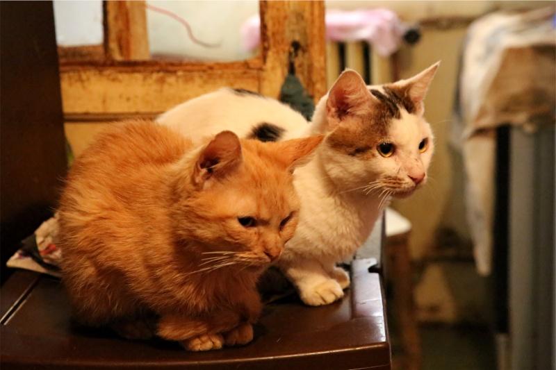 Parrainage des chats de Mme Angela Hx9a4223