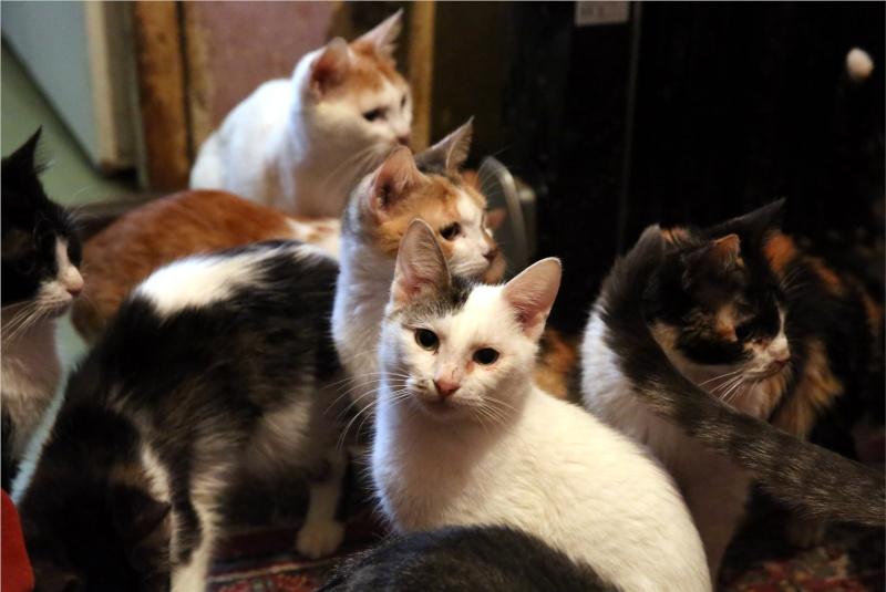 Parrainage des chats de Mme Angela Hx9a4224