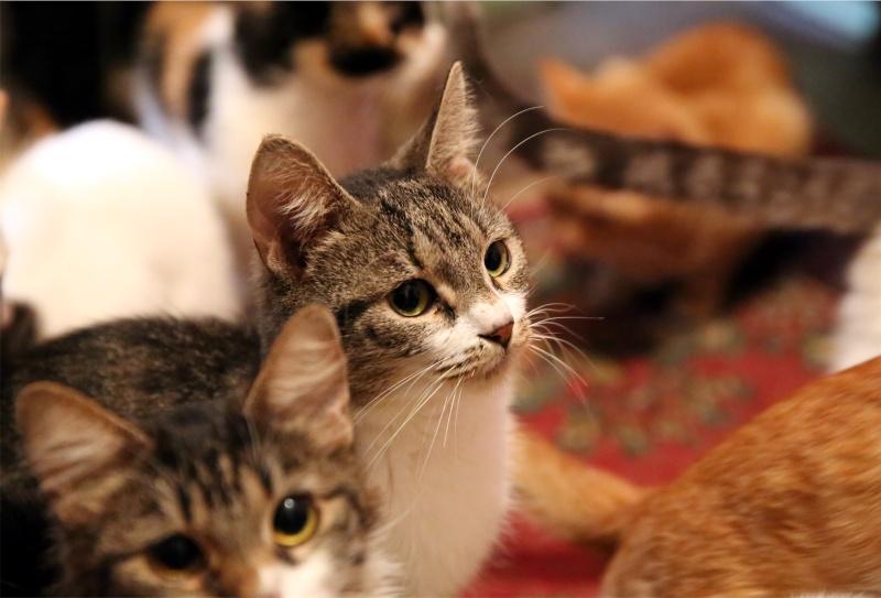 Parrainage des chats de Mme Angela Hx9a4225