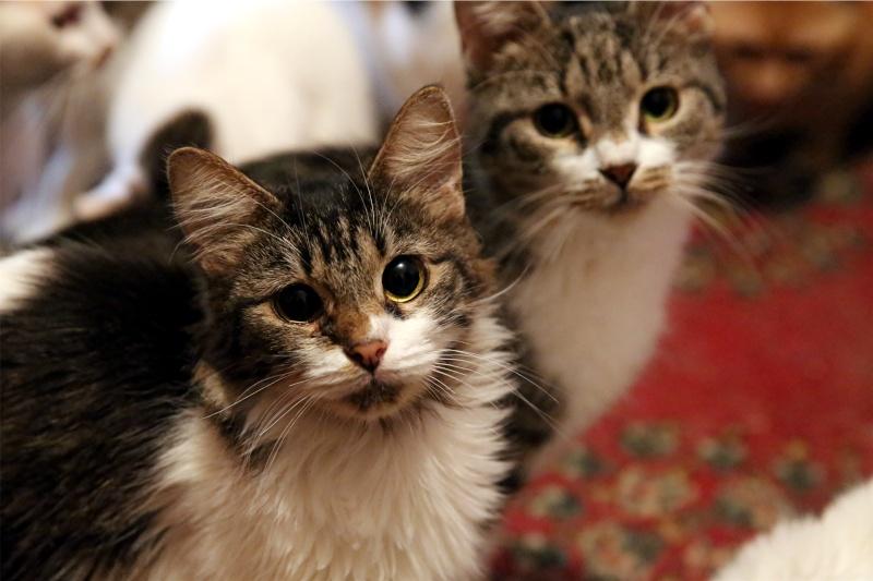Parrainage des chats de Mme Angela Hx9a4226