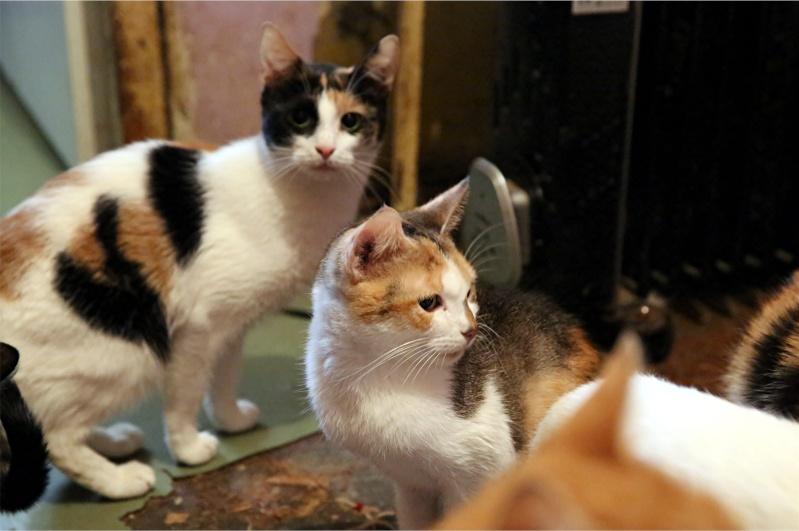 Parrainage des chats de Mme Angela Hx9a4227