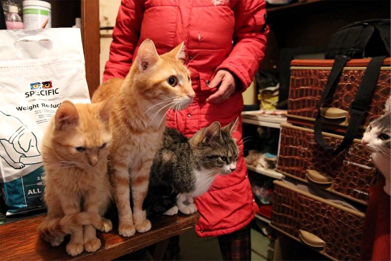 Parrainage des chats de Mme Angela Hx9a4228