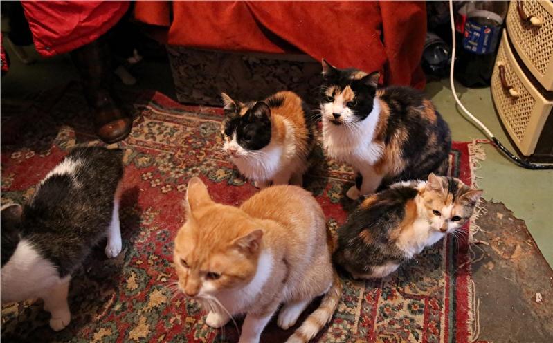 Parrainage des chats de Mme Angela Hx9a4229
