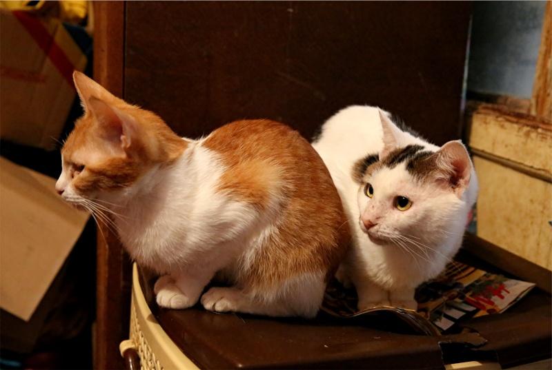 Parrainage des chats de Mme Angela Hx9a4230