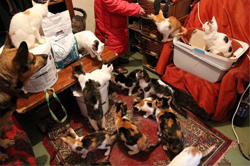 Parrainage des chats de Mme Angela Hx9a4311