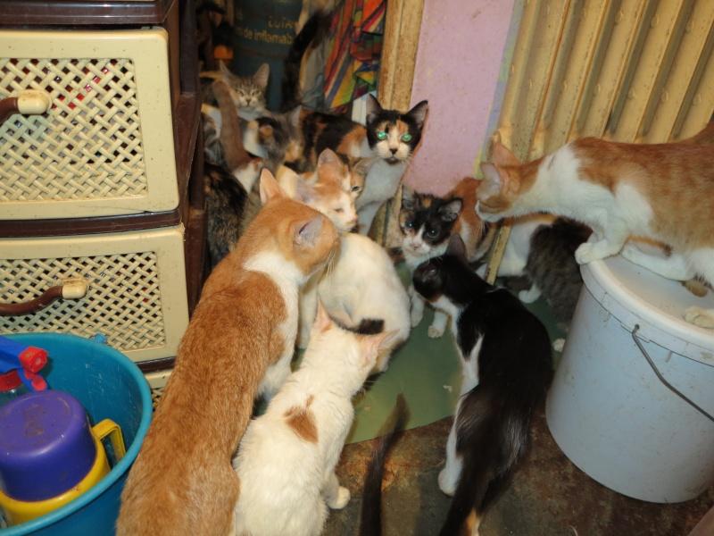 Parrainage des chats de Mme Angela Img_0941