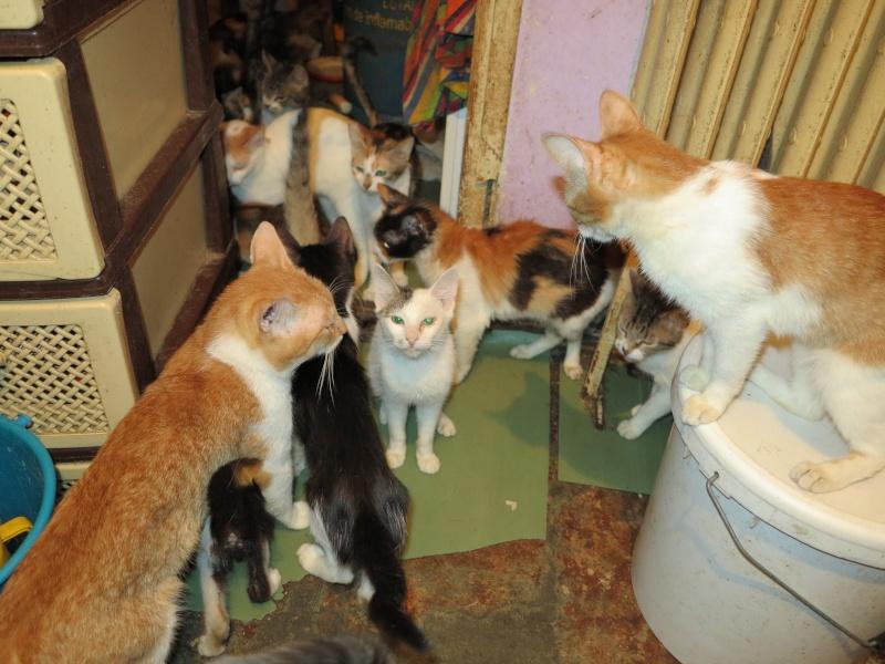 Parrainage des chats de Mme Angela Img_0942