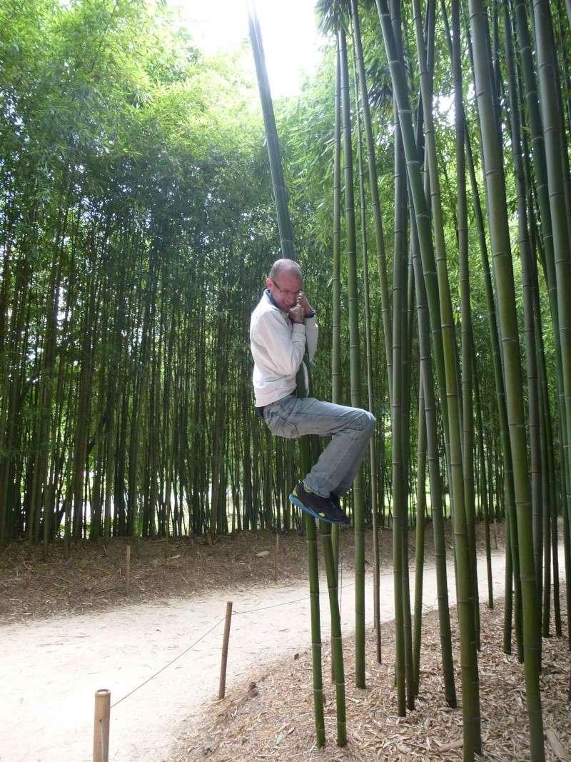 Les photos de vacances Bambou10