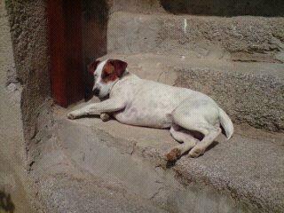 Photo de nos chiens batards! 13279211