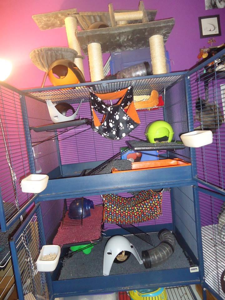 Photos de vos cages - Page 3 10426010