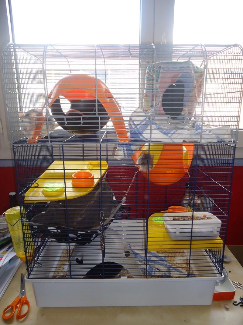 grande porte - Photos de vos cages 2014-010