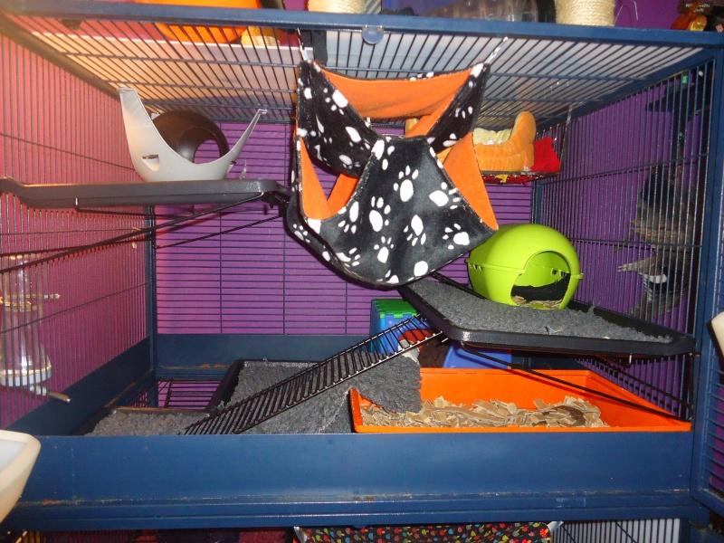 Photos de vos cages - Page 3 Dsc07110