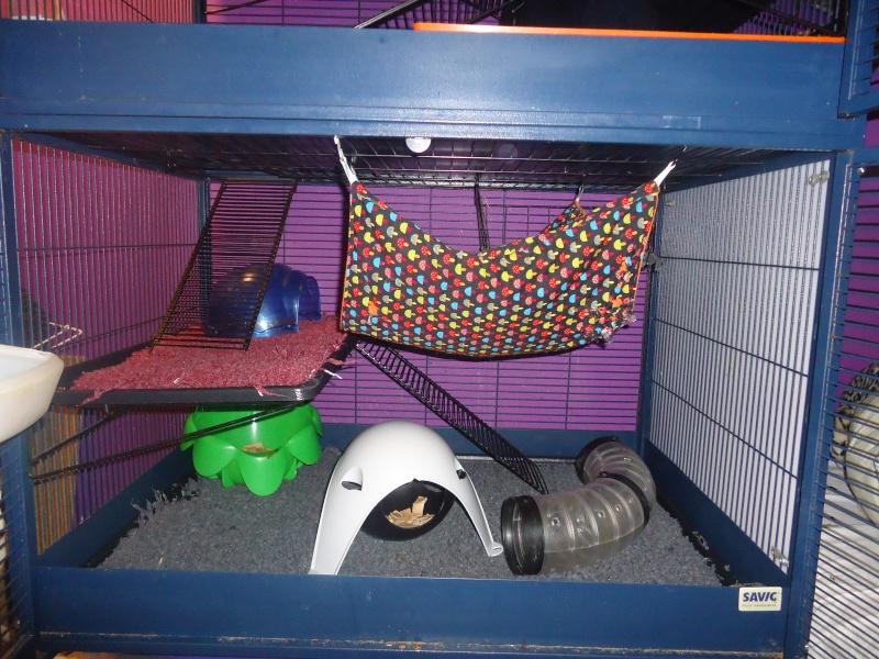 Photos de vos cages - Page 3 Dsc07111