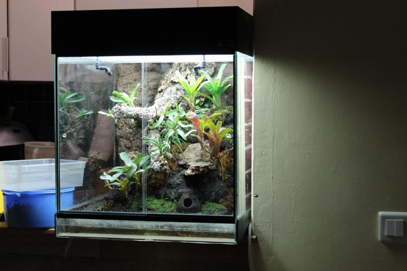 Photo terrarium pour mes dendrobates azureus Img_1513