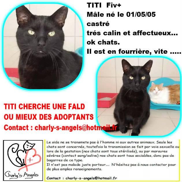 mega urgence pour deux super chats fiv en fourri re delai fourriere carcassonne 11. Black Bedroom Furniture Sets. Home Design Ideas