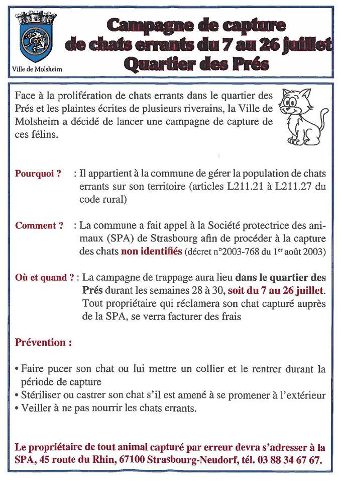 ALERTE/ CAPTURES ET DISPARITIONS DE CHATS  - Page 5 10497010