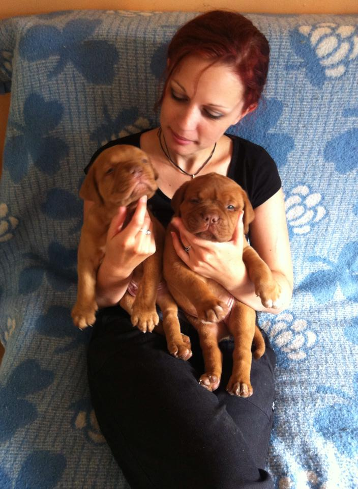 Chiots dogues de Bordeaux LOF 10564810