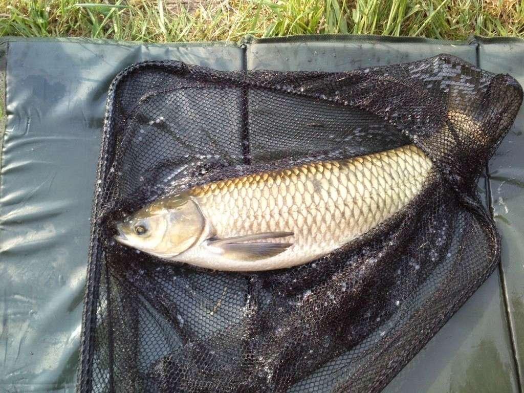 Pêche au blanc Dsc_0011