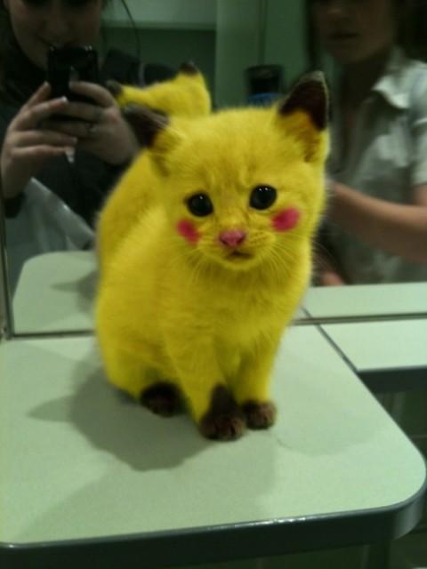 Photo/Vidéo insolite Pokémon Chat-p10