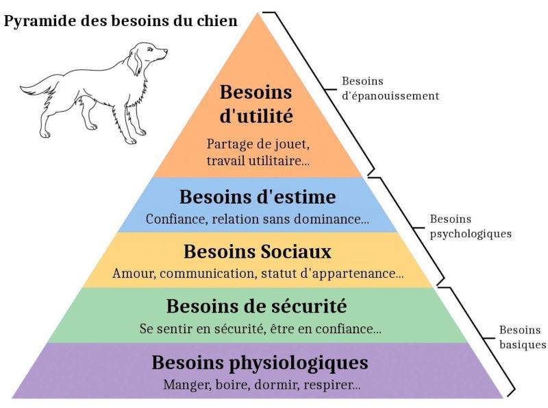 Pyramide de Maslow pour chiens 10485210