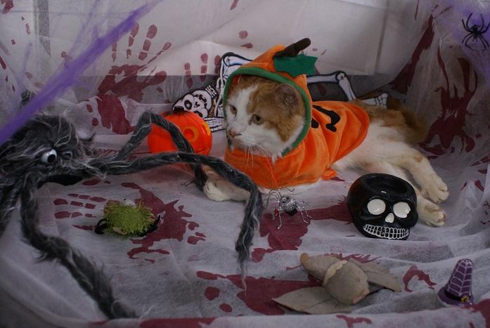 La Citrouille d'Halloween Dsc03812