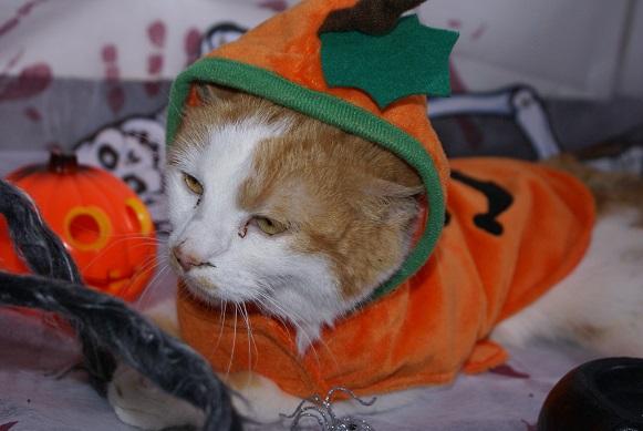 La Citrouille d'Halloween Dsc03813