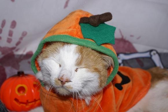 La Citrouille d'Halloween Dsc03814