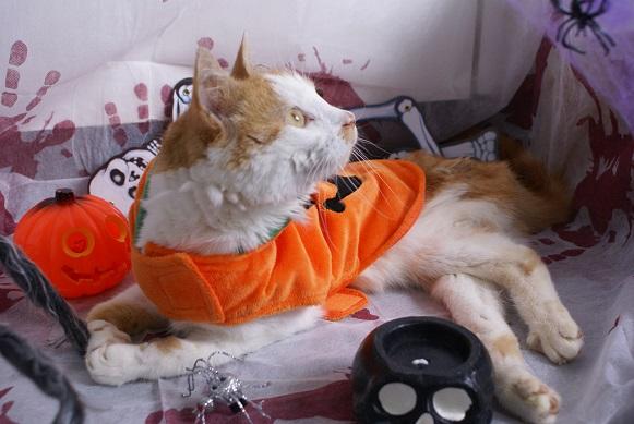 La Citrouille d'Halloween Dsc03912