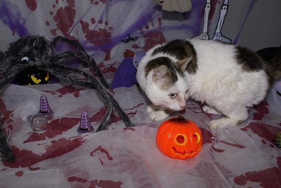Petite araignée d'Halloween Dsc04011