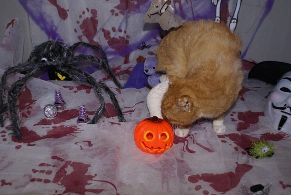 Le dracula d'Halloween ! Dsc04012