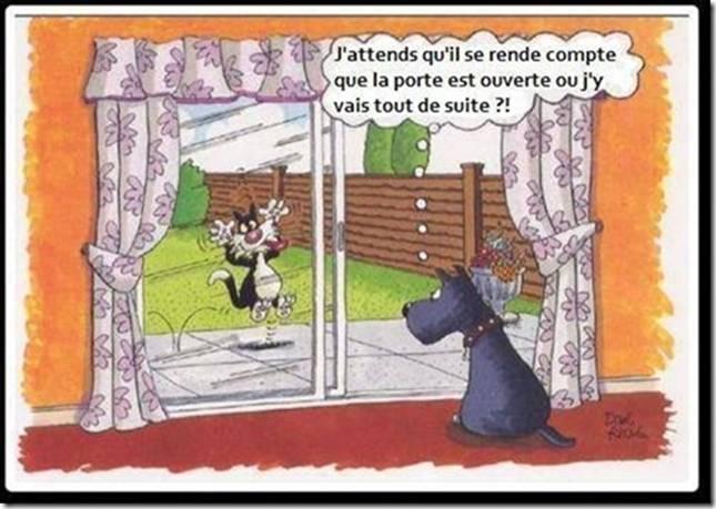 Humour en image du Forum Passion-Harley  ... - Page 3 Chien_10