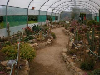 Serre aux cactus de Roscoff Photo932