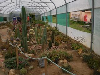 Serre aux cactus de Roscoff Photo933