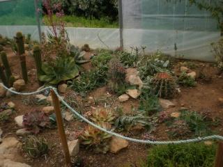 Serre aux cactus de Roscoff Photo934