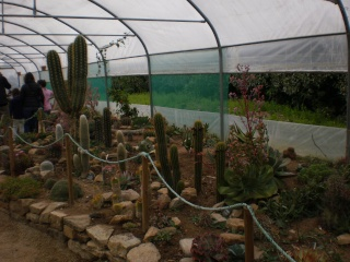 Serre aux cactus de Roscoff Photo935