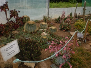 Serre aux cactus de Roscoff Photo936