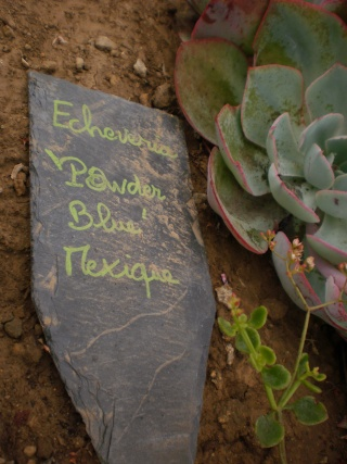 Serre aux cactus de Roscoff Photo939