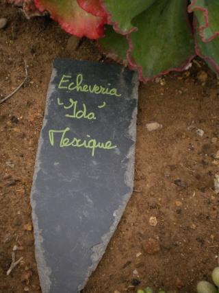 Serre aux cactus de Roscoff Photo949