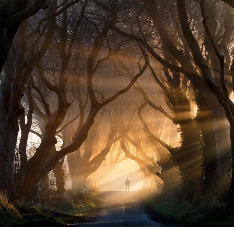 أجمل الصور لممرات تحت الأشجار Amazin10