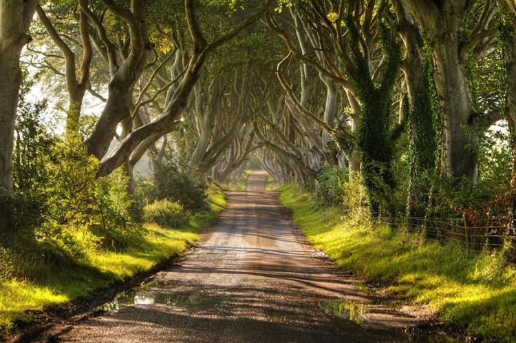 أجمل الصور لممرات تحت الأشجار Amazin11
