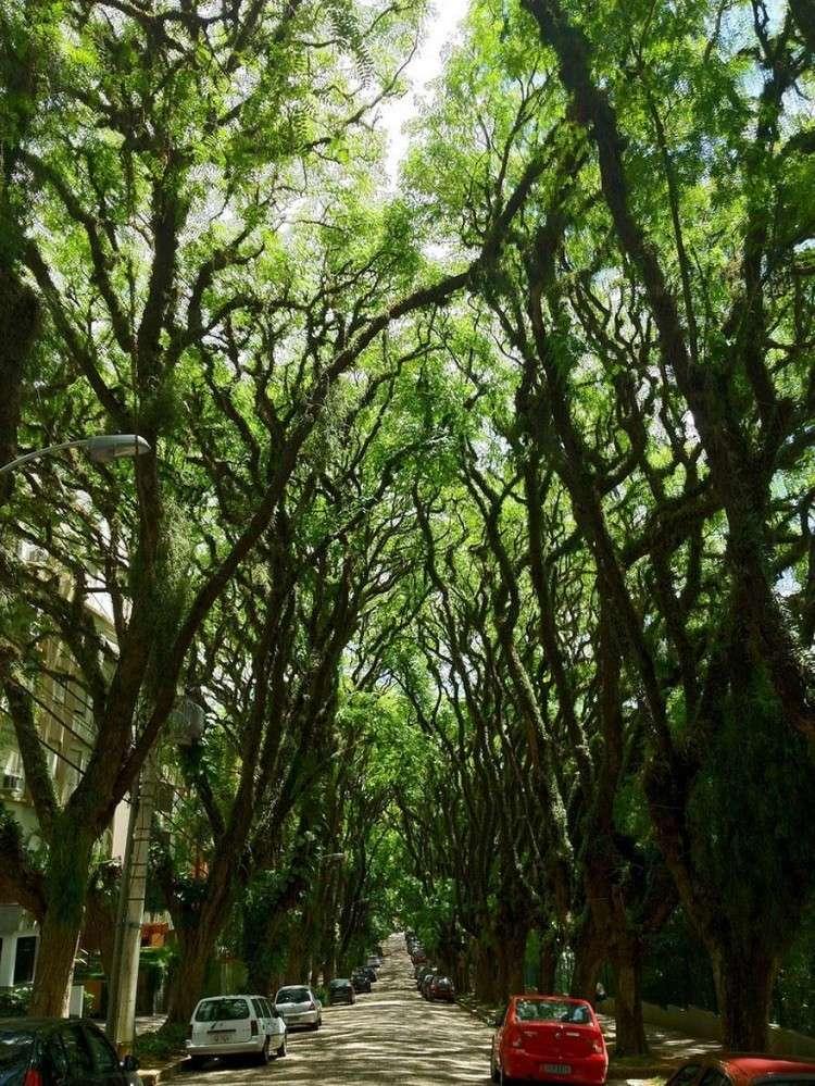 أجمل الصور لممرات تحت الأشجار Amazin12