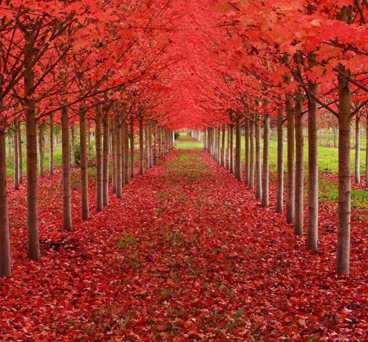 أجمل الصور لممرات تحت الأشجار Amazin13
