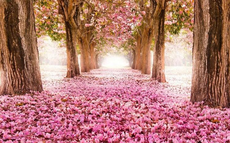 أجمل الصور لممرات تحت الأشجار Amazin15
