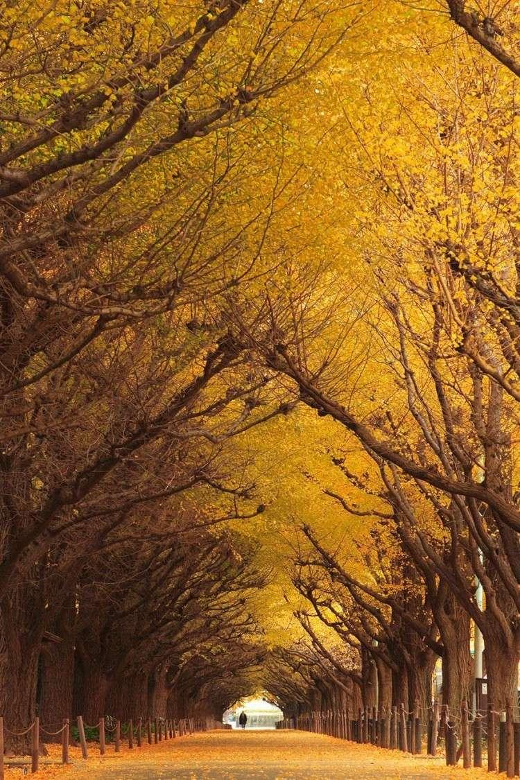 أجمل الصور لممرات تحت الأشجار Amazin16