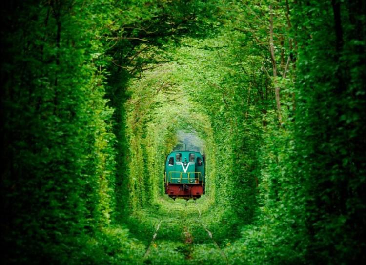 أجمل الصور لممرات تحت الأشجار Amazin18